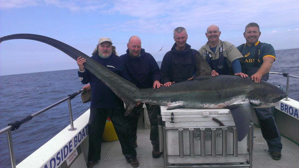 Thresher Shark caught in the Celtic Deep